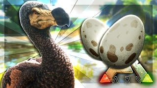ARK: Survival Evolved Server - THE DODO EGG FARM! #57