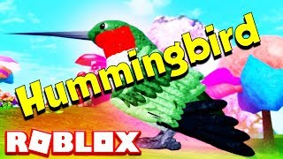 HOW TO PLAY AS A HUMMINGBIRD ON ROBLOX (FEATHER FAMILY)