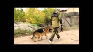 Дрессировка собак в Оренбурге.