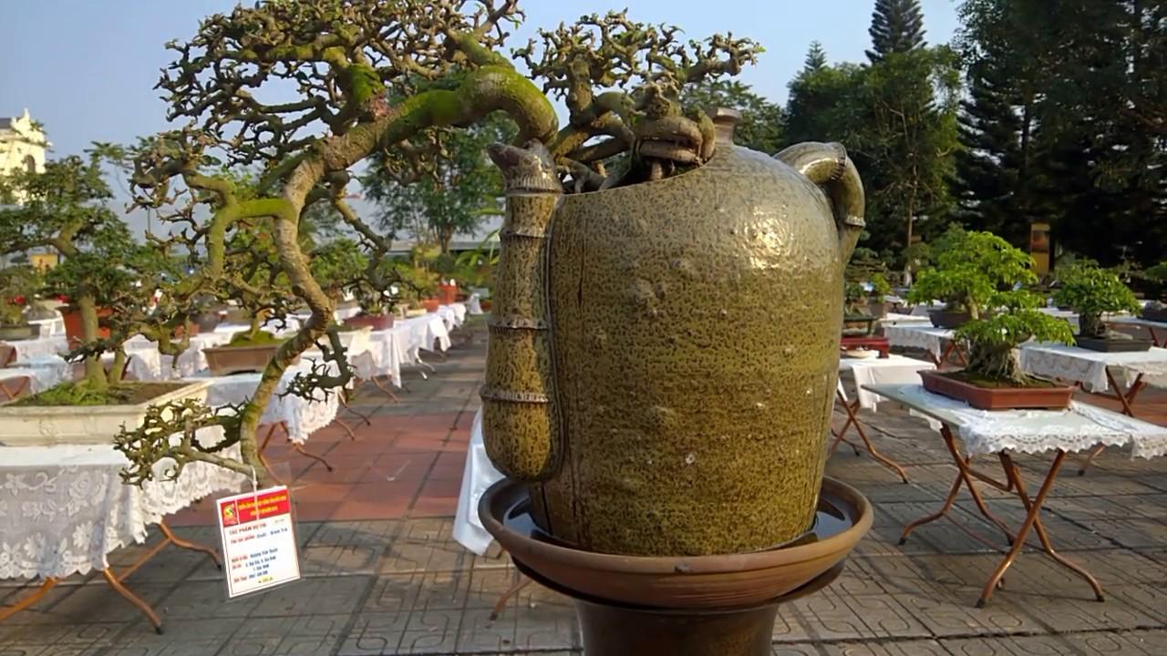 top 15 cây bonsai dáng huyền thác đổ cực đẹp, dang tien thuy