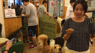 Dog cafes - Saranghae Babo Tonggae (노량진, 사랑해 바보 똥개), Nory...