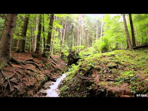 Carpathian Mountains Forest River - 1 Hour Relaxing - Full HD 1080p Nature and Forest Birds Sound