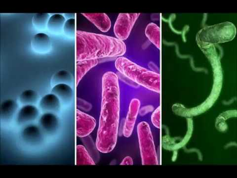 useful bacteria and their roles Role of microorganism in food has as its objective the elimination of organisms or prevention of their harmful bacteria and the beneficial.