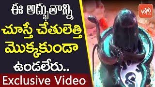 శివ పూజలో పాల్గొన్న పాము   exclusive video   snake participate in lord siva pooja   yoyo tv channel