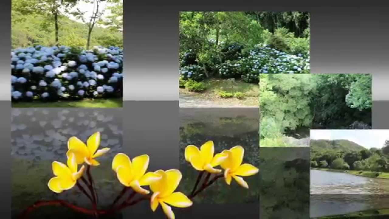Lagoa Da Harmonia. Viver Em Paz Com A Natureza. Paraíso A