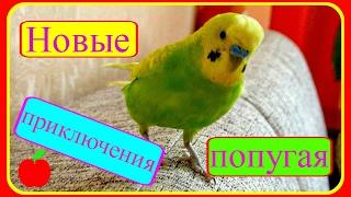 Новые приключения попугая Тоши//Волнистый попугай//Смешные игры попугая