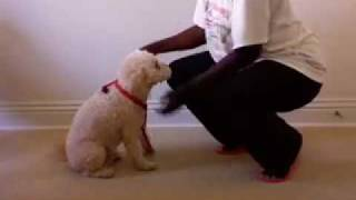 How To Put On A Simple Nylon Dog Harness