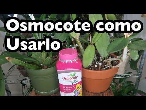Osmocote como usarlo? bueno para orquídeas?Funciona cultivo en semi  hidroponico | Genesis Orquídeas