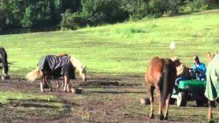 Parelli Natural Horse Training Tip - Respect at Feeding Time
