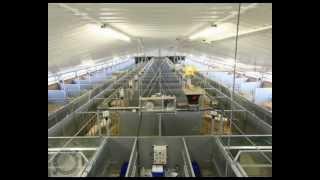 Rattlerow Farms pig breeding stud