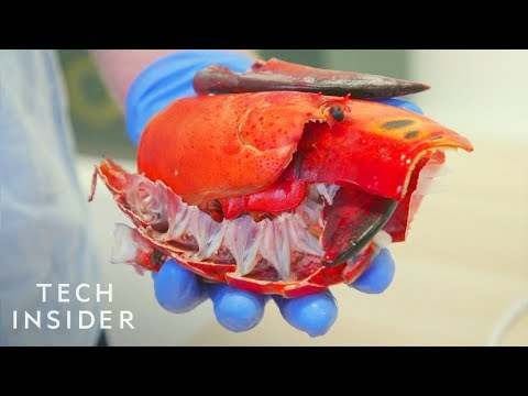 How Lobster Shells Could Replace Single-Use Plastic