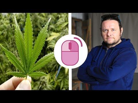 Marihuana je živo biće i treba je legalizovati... Marko Vidojković