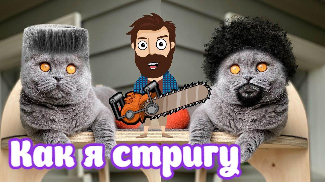 Приколы! КАК Я СТРИГУ КОТА! Самые смешные видео! Смешная анимация от Доми шоу!