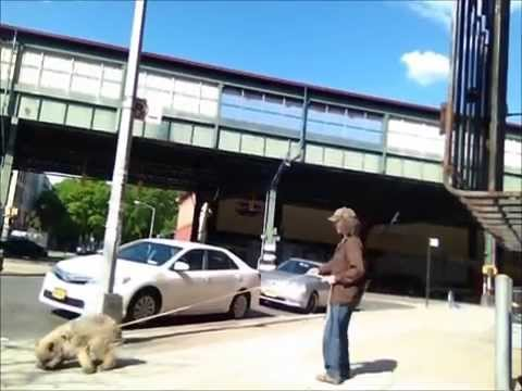 Dog Wont Eat Or Come Back When Called