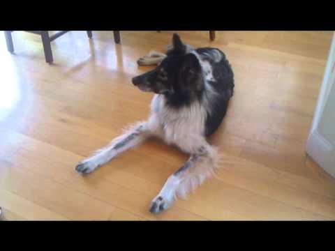 Bonnie Hess Dog Training