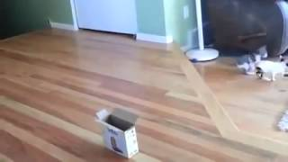Funny animals for animal FAIL COMPILATION FAIL 2015 feil 2015 funny cat and dog fails ПРИКОЛЫ 2015 2