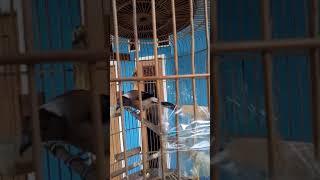 Video Pentet raja dahsyat download MP3, 3GP, MP4, WEBM, AVI, FLV Oktober 2018