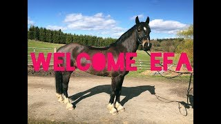 MEET MY NEW HORSE