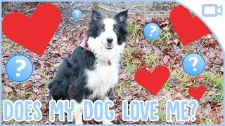 How to Tell if Your Dog Loves You!