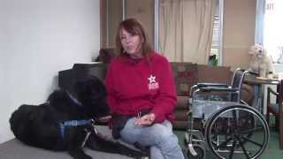Freedom Service Dogs - Training Video 2