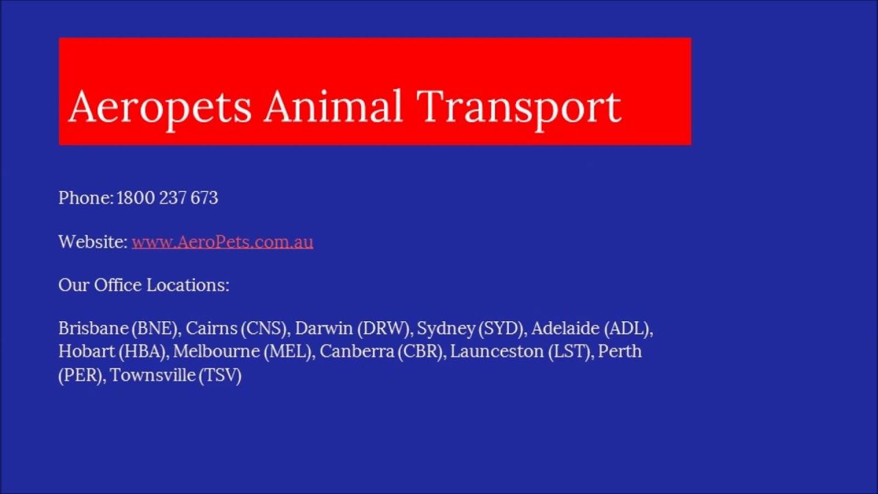 Qantas Pet Transport Australian And International Pet