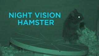 Night Vision Hamster