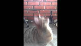 Кошка ушла