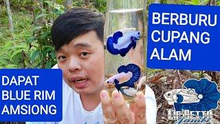 #8 BERBURU CUPANG ALAM SUMATERA MALAH DAPAT BLUE RIM