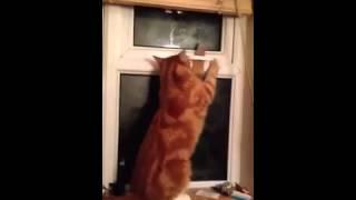 Кот открывает себе путь на свободу