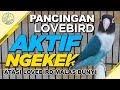 Bikin Lb Aktif Ngekek  Mp3 - Mp4 Download