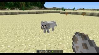 Как приручить собаку поменять ей имя цвет ошейника