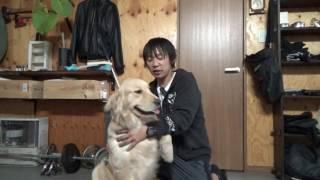 犬は常に飼い主と同じ気持ちになりたいキュートハニーである