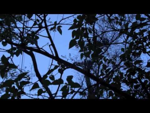 Nashville Mandolin Ensembe: Where No Mandolin Has Gone Before