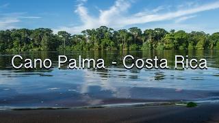 Costa Rica & Cano Palma