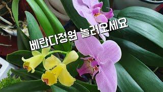 [환희사랑VLOG]요즘 베란다에선 하나둘 꽃이피기 시작…
