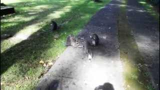 Обезьяна с котом (Monkey cat)