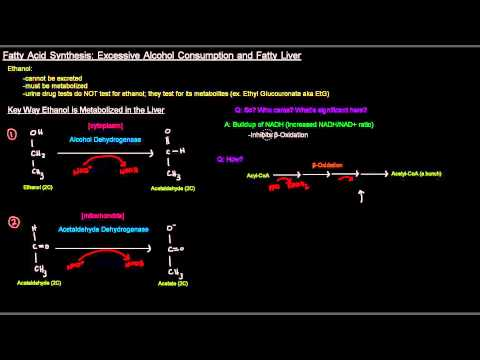 Fatty Acid Synthesis (Part 10 of 12) – Excessive Alcohol Consumption and Fatty Liver
