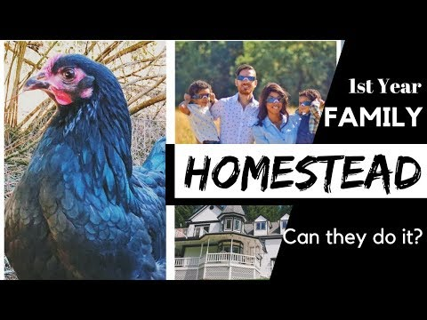 First Year Family Homestead - Can they do it? - How they are creating their 60 acre homestead Mp3