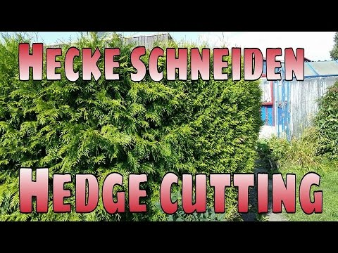 hecke schneiden hedge cutting by crusader xl youtube. Black Bedroom Furniture Sets. Home Design Ideas