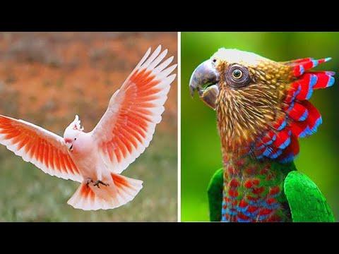 Самые яркие и красивые попугаи в мире! - Видео онлайн