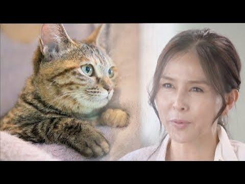 動物虐待の防止へ―動物愛護法を改正 2019