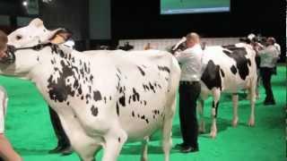Concours Holstein Eurogénétique 2012