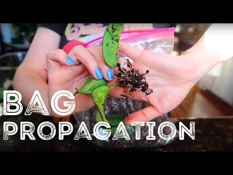 Ziplock Bag Propagation + Results