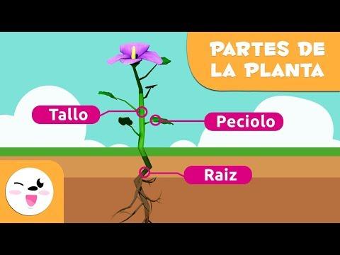 la-planta-y-sus-partes-para-niños---ciencias-naturales-para-niños