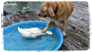 ПРИКОЛЫ С ЖИВОТНЫМИ | FUN WITH ANIMALS #380