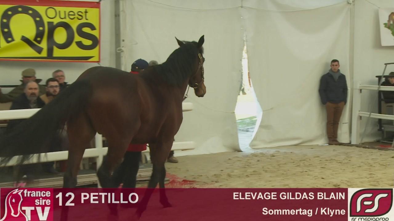 Lot 12 petillo elevage gildas blain salon des for Gildas salon