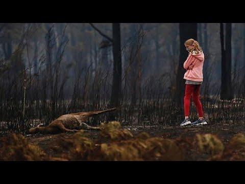 Более миллиарда животных погибли в австралийских пожарах