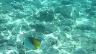 マニャガハ島でのビーチシュノーケルです。 たくさんのお魚と一緒に泳げ...