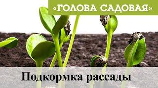 Голова садовая   Подкормка рассады