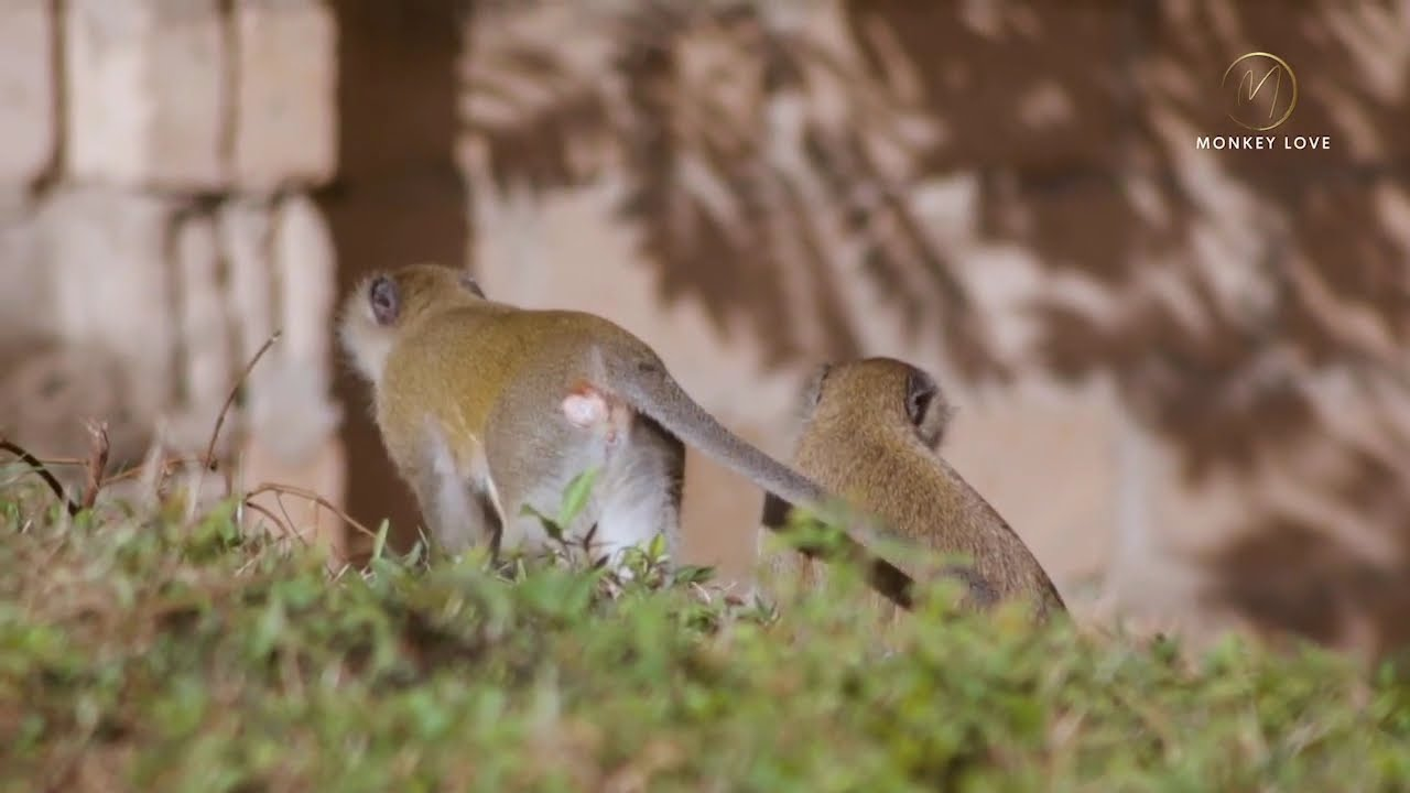 Smart MonkeyS Walk together with happiness